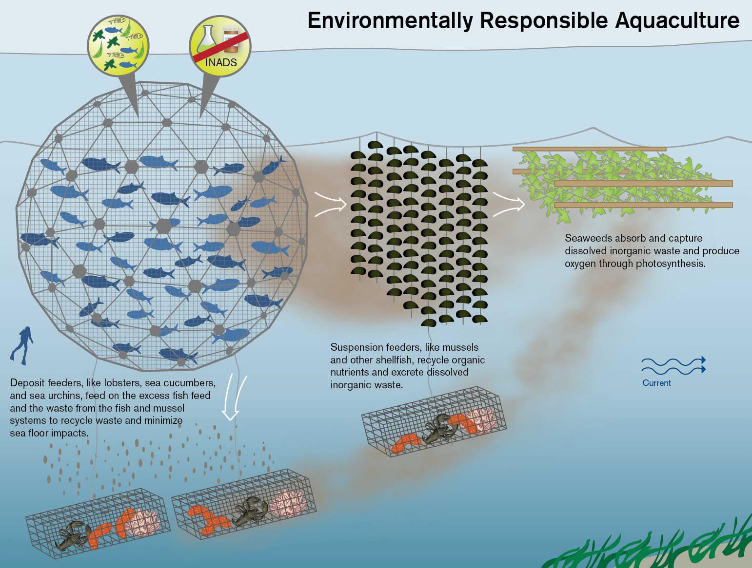Geodesic Domes For Deep Sea Fish Farming